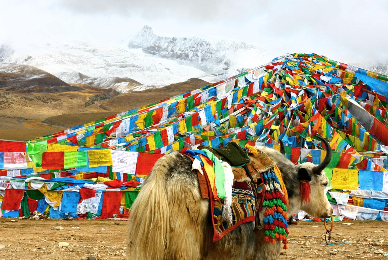찻잎과 소금으로 환생한 사랑의 전설, 쑤여우차를 마시는 티베트 - 티베트 라싸와 세계에서 가장 높은 지역의 호수인 남초